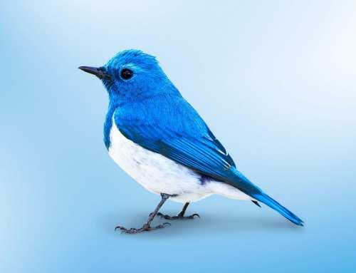 Twitter 2020 или как вести и раскрутить аккаунт в твиттер